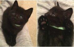 Šeimininkai išsikraustė ir paliko katę: savo gelbėtojus ji nustebino miela dovana