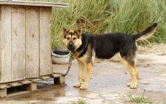 Pietų Korėjoje šunų prieglaudos vadovė apkaltinta keturkojų žudymu