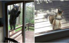 Netikėti keturkojai svečiai: kai į langą pasibeldžia laukiniai žvėrys
