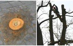 Ant nupjautų medžių kelmų sužibo kapų žvakelės