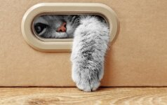 Kodėl katės taip mėgsta dėžes?