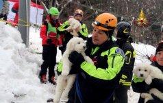 Išgirstas tylus pagalbos šauksmas: iš sniego ir griuvėsių Italijoje išgelbėti trys mažyčiai šuniukai