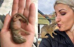 Nepaprasta draugystė: voverė kasdien grįžta pas moterį, kuri ją išgelbėjo
