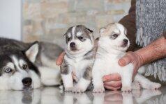 Kalė atsivedė šuniukų: kokių klaidų nedaryti?