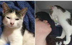 Išgelbėtas kačiukas tirpdo aplinkinių širdis