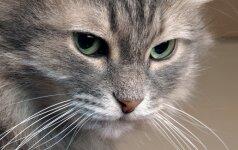 Katė tuštinasi ne vietoje. Auklėti ar gydyti?