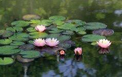 Ruoškimės pavasariui: vandens telkinių projektavimo ypatumai