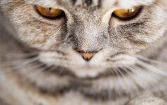 Nauja interneto žvaigždė: išvysk katiną, sėdintį kaip žmogus