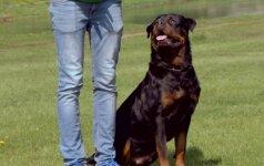 9 - oji dresūros pamoka: kaip išmokyti šunį eiti šalia šeimininko?