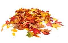 Ar rudeniniai lapai tinkami kompostavimui?