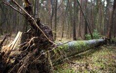 Privatus miškininkas: visuomenė bijo pripažinti, kad apie miškus neišmano