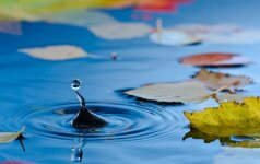 Kaip pasirūpinti vandens telkiniu ir jo gyventojais prieš žiemą?