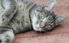 Kaip elgtis katei nukritus iš didelio aukščio
