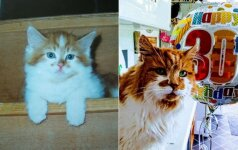 Seniausias katinas pasaulyje: atšventė 30-ą gimtadienį