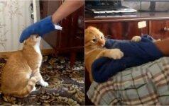 Štai ką gali išerzintas katinas: šeimininkui teko slėptis balkone