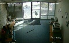 Nufilmuota: Kolorade į biurą besibraunantis ožys sudaužė durų stiklus