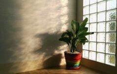 Stiklo blokeliai: natūralios šviesos ir privatumo suderinimas