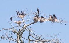 Vieta, kur vyksta nuožmus karas tarp gamtos ir žmogaus: štai kaip ji atrodo iš paukščio skrydžio