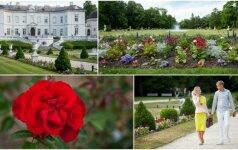 Birutės parkas išskleidė savo grožį: pagaliau pražydo vasara