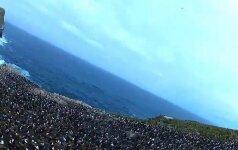 Operatorius už dyką: nudžiovęs kamerą paukštis nufilmavo pingvinų koloniją