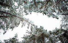 Orai: vienai parai šalį sustingdys šaltis
