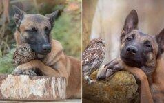 Užburianti draugystė: vokiečių aviganis mėgsta leisti laiką su pelėdomis