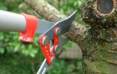 Medžių ir krūmų genėjimo pagrindai