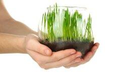 Išsami informacija besiruošiantiems auginti daržovių daigus