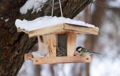 Patarimai lesinantiems paukščius: kokių klaidų nedaryti?
