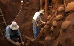 Milžiniška skruzdėlių kolonija stebina savo sudėtingumu