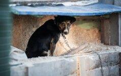 Tokį elgesį vadina baisia gėda: kaip tapti šalimi, kuri nenaikina benamių gyvūnų?