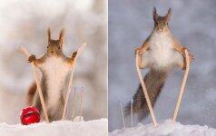 Žiemos linksmybės: pažiūrėkite, kaip sniegu džiaugiasi voverės