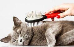 Ką apie katę išduoda jos kailio spalva