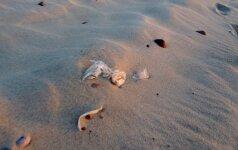 Paplūdimio šiukšlės žaloja poilsiautojų kojas