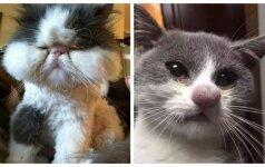 Katės, kurios pralaimėjo kovą prieš bites