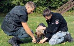 Policijos kinologų gretas papildė 10 tarnybinių šunų