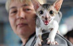 Pasipiktino priverstiniu gyvūnų ženklinimu: juokas per ašaras