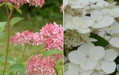 Pražydo unikali gėlių kolekcija: spalvų gama neleidžia atitraukti akių