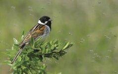 Geriausias praėjusių metų paukščių fotografas: toje vietoje buvo susirinkę visi pasaulio uodai