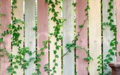 Apželdintos tvoros ir gyvatvorės – keli vertingi triukai