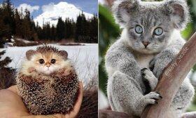 Internautai parodė, kaip atrodytų pasaulis, jei viskas turėtų kačių snukučius: rezultatai šiek tiek nejaukūs