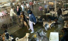 Žiauri kinų tradicija nesikeičia: šunys toliau žudomi ir valgomi