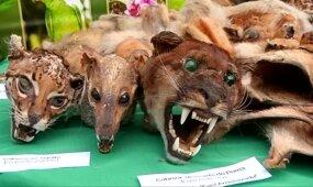 Peru aptiktas kraupus radinys: šamanų naudojamų gyvūnų gausą palygino su Nojaus arka
