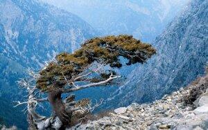 Nereali savaitė Kretoje, šalia Baltųjų kalnų