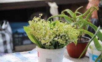 Mažos gėlės – didelės baudos