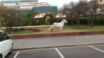 Видео: пони сбежал из пасхальной инсталляции у Большого театра