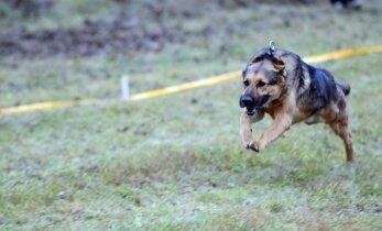 Šuo sumušė greičiausio pasaulio žmogaus rekordą