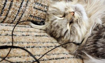 Sukūrė muziką katėms: įvertinkite