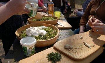 Gaminami pietūs iš miško žolių ir šaknų