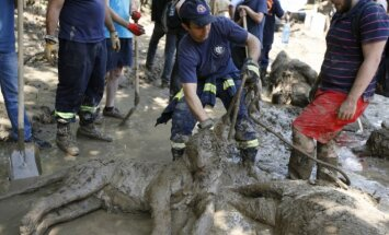 Tbilisio zoosode rasti negyvi žvėrys